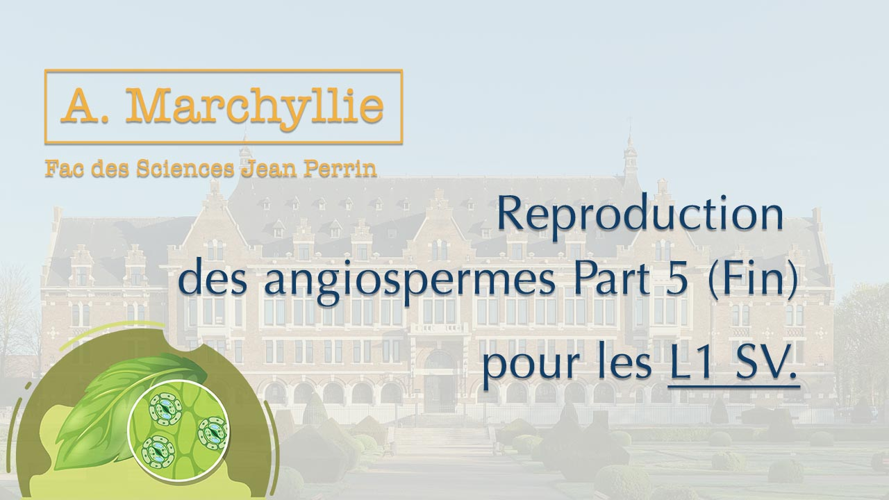 A. Marchyllie - L1 SV - Reproduction des Angiospermes - Part 5 (fin)